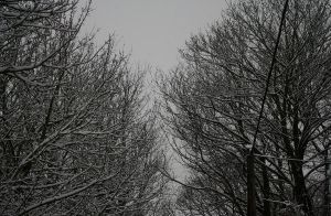 Snow Trees by sameera95