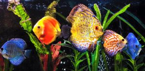 Discus  by Frampton87