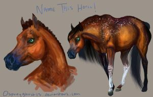 Name this horse! by Ospreyghost13