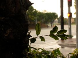 Green Leaf in the City by Pickles4LES