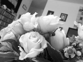 Pink Roses in Black and White by gPrincessofDarknessf