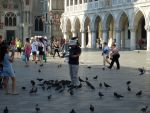 Feeding pigeons in Venice - a living pidgeon tree by artlilac