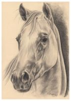 Horse 3 by Helenr251