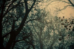 into the fog by illusionality