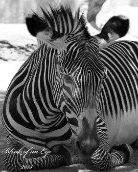 Black and White of a Black and White by TheMutha
