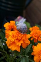 Snail Travels 2 by para-vine