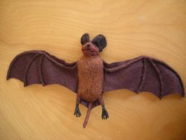 Mexican Freetail Bat by creturfetur
