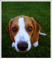Meet Marley by MikeMonaghanPhoto