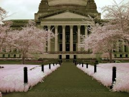The Legislative Building-IR by La-Vita-a-Bella