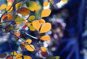 Fall Leaves 2 by Tailgun2009