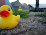 Duck by Marlyn-mad