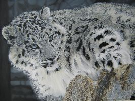 snow leopard by eymage