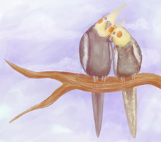 Cockatiel Cuddle by pinemartenartin