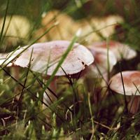 little mushrooms by dosske