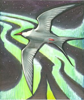 Arctic Tern by NuclearGenie