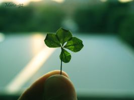 My clover of the luck by Maria-92