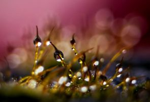 moss...... by AdrianaKH-75