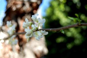 White Floras by Ym2d