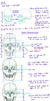 Skulls - Research And Practice Sheet by Minks-Art