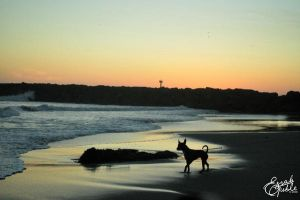 Dog Silhouette by zerisse