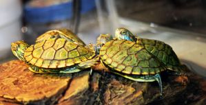 turtles 4 by x-chriscross-x