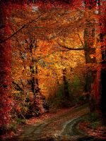 The silence of fall by Metal-Goddess