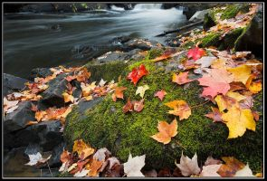Fall at  Brook Falls by IgorLaptev