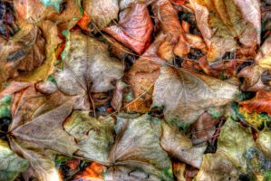 Autumn Leaves by s-kmp