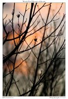 Winter Tree FLowers and Sunset by yellowcaseartist