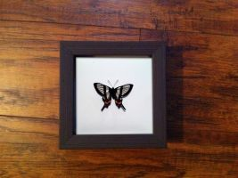 The Sylphina Angel Butterfly Study by TheButterflyBabe