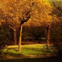 golden tree by AdrianaKH-75