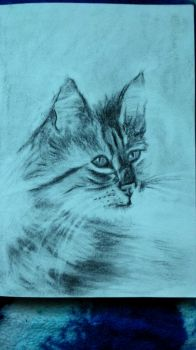 sketchbook - kitty by Tsenov