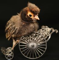 Golden Laced Polish Crested (On Wheels) by Innocentium