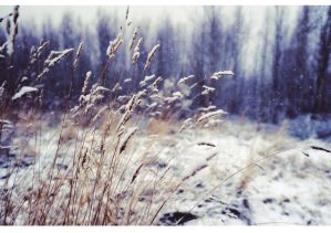 Winter wind of change. by ~Bunnis