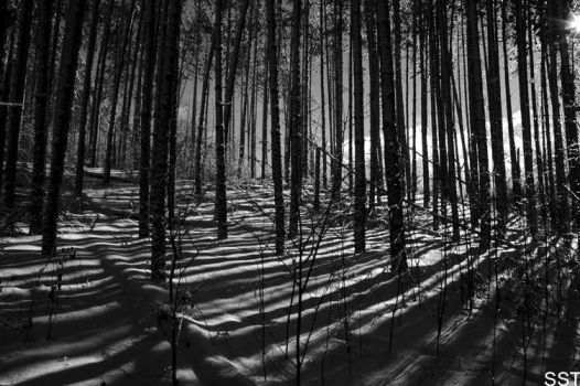 commercial forest by Fakezippo
