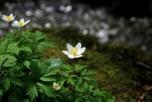 Flower down at the river by Hundgodis