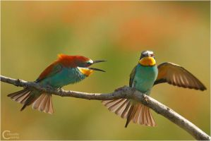 Bee Eaters by ClaudeG