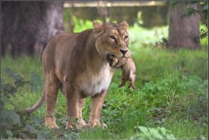 Lioness and Cub 04-98 by lomoboy