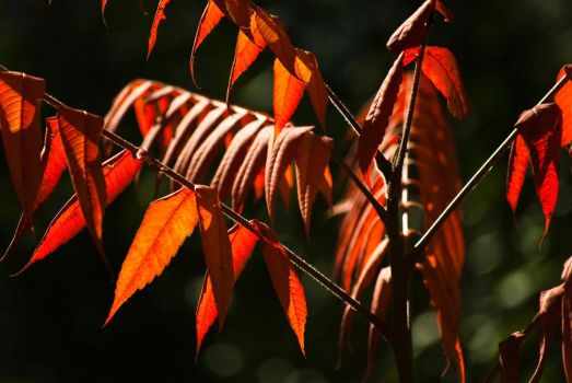 Fall's Red by d-elner