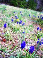 Signs of Spring I by Sognatore-Turchese