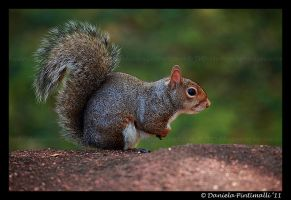 Squirrel by TVD-Photography
