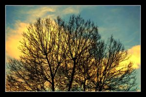 Lonesome trees by garbo009