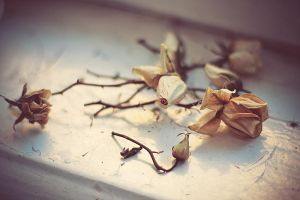 dried roses by Flower1991
