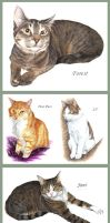 Cat Portraits by Seaff