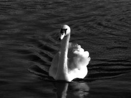 swan song by awjay