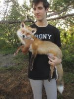 Albino Eyed Red Fox Soft Mount Finished by NightsGem