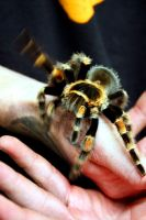 Twitchy Arachnid by bebelee
