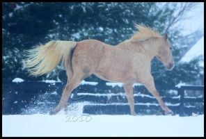 Winter Galloping by Phantom303