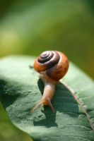 snail by spllogics-photo