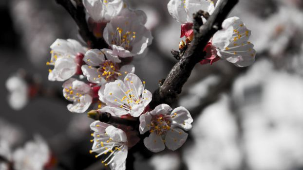 Spring WP by ds2k5